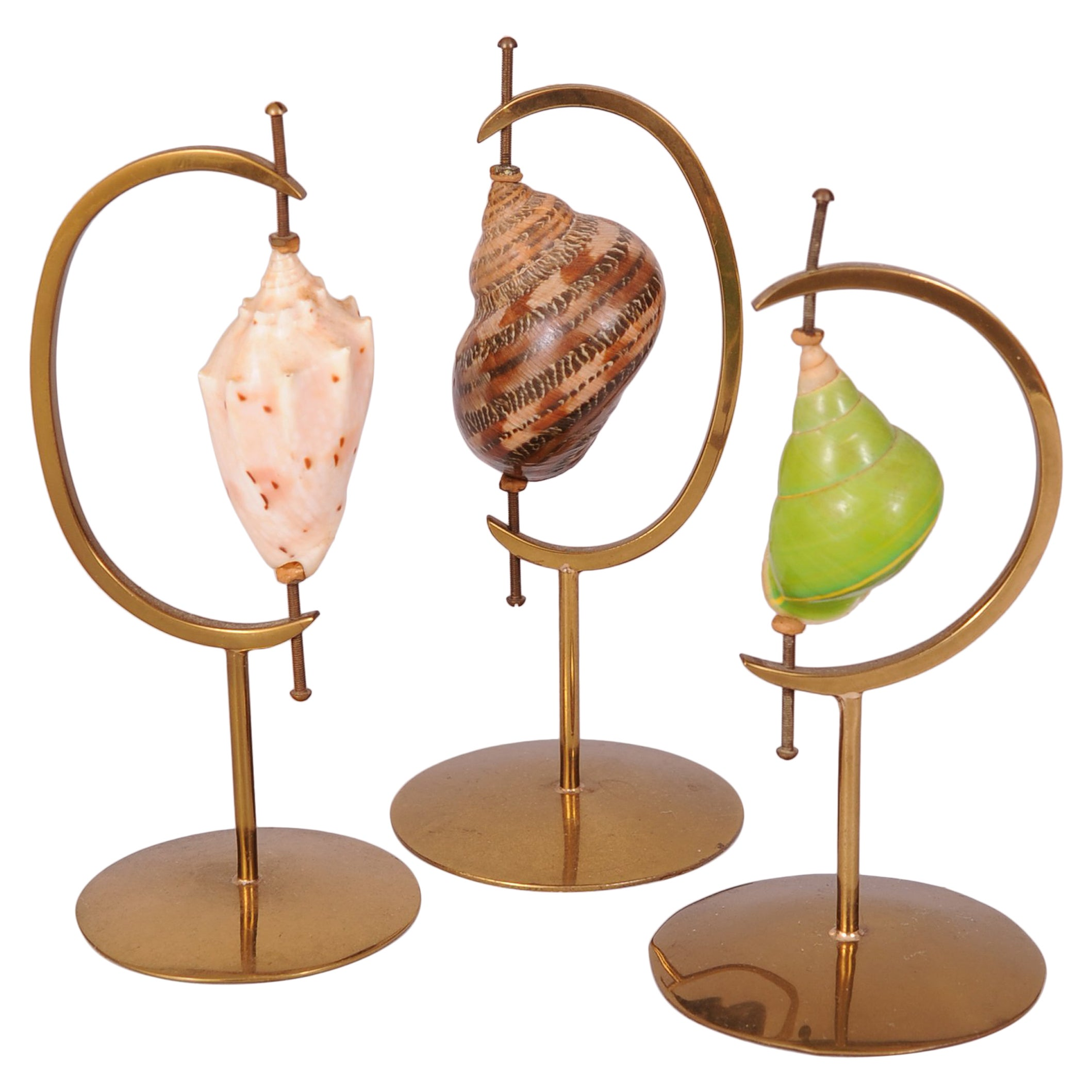 Marguerite Stix Designed Brass Sea Shell Display Stands and Shells, circa 1965