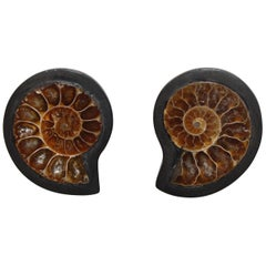 Monies One of a Kind Ammonite and Ebony Clip Earrings