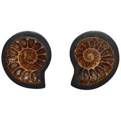 Monies One of a Kind Ammonite and Ebony Clip Earrings