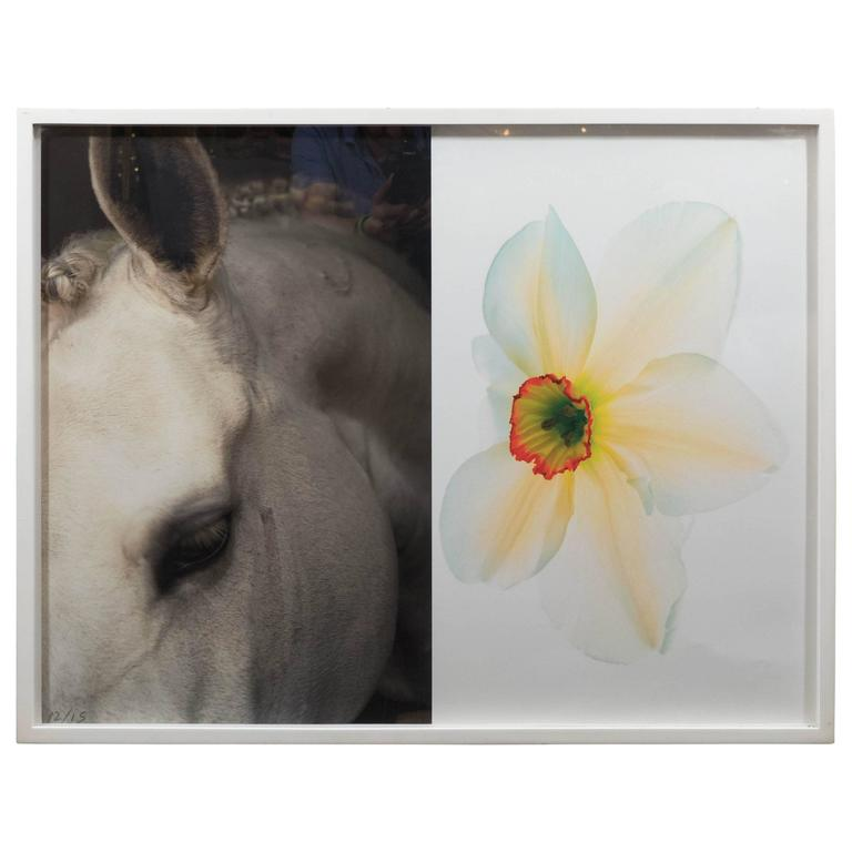 "Christopher Makos/Paul Solberg ""Horse & Flower"" Photograph Series 1"