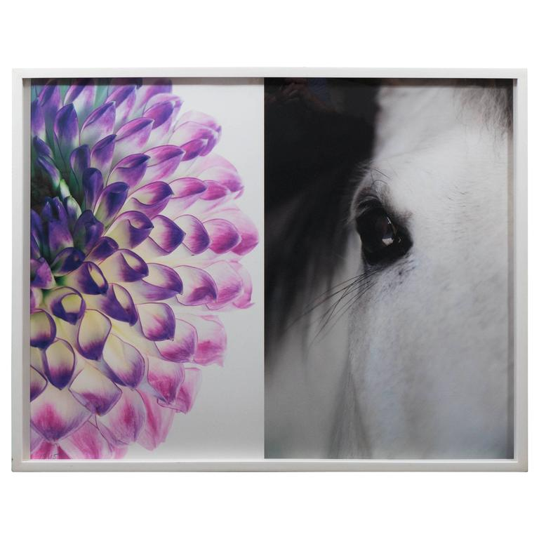 "Christopher Makos/ Paul Solberg "" Horse & Flower"" Photograph Series 1"