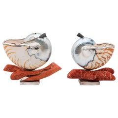 Nautilus Shells for Salt for an Elegant Table