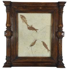 Victorian Framed Specimen Fossil Plaque