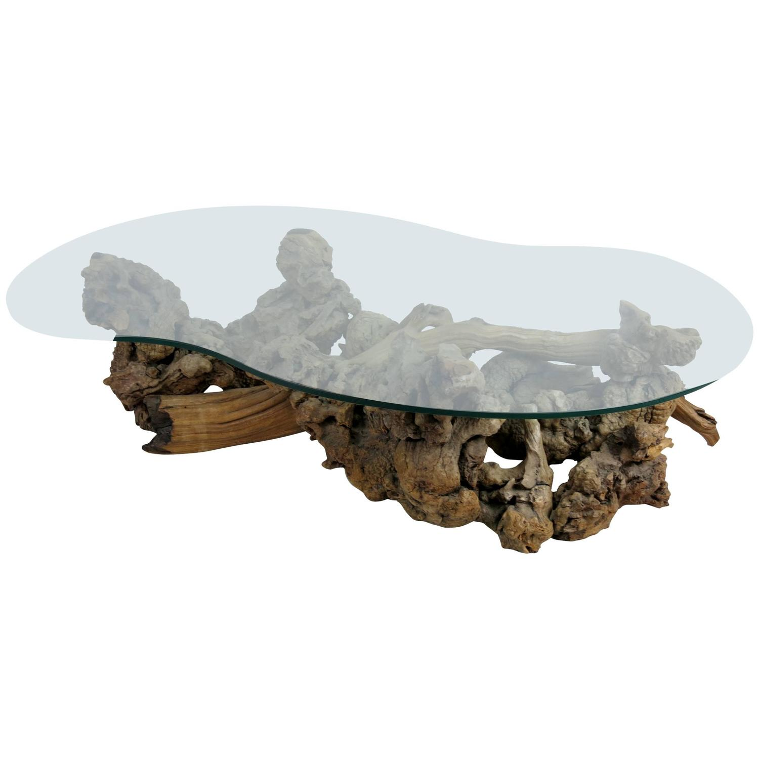 Root Burl Driftwood Coffee Table with Free Form Glass Top at