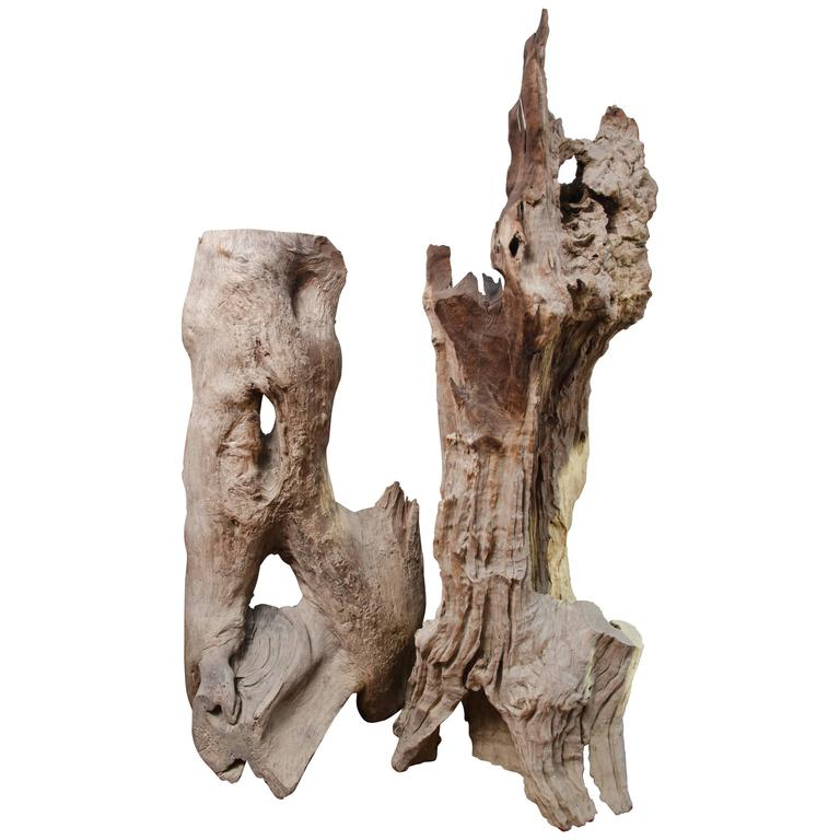 Thai River Bed Petrified Tree Root from Chang Mai 1