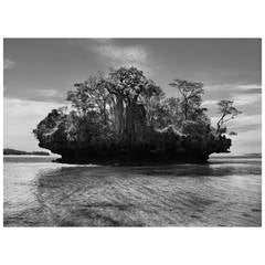 Sebastião Salgado, Baobab Trees on a Mushroom Island Photograph
