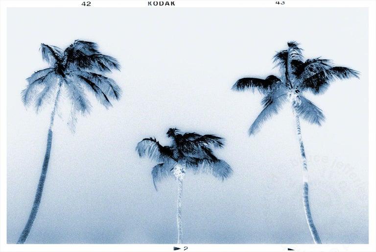 <i>3 palms</i>, 2016, by Bruce Reinfeld, offered by Zatista