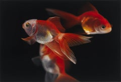 Goldfish, Painting, Oil on Canvas