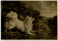 A french fox dog chasing a butterfly by Edward Fisher - Mezzotint - 18th Century