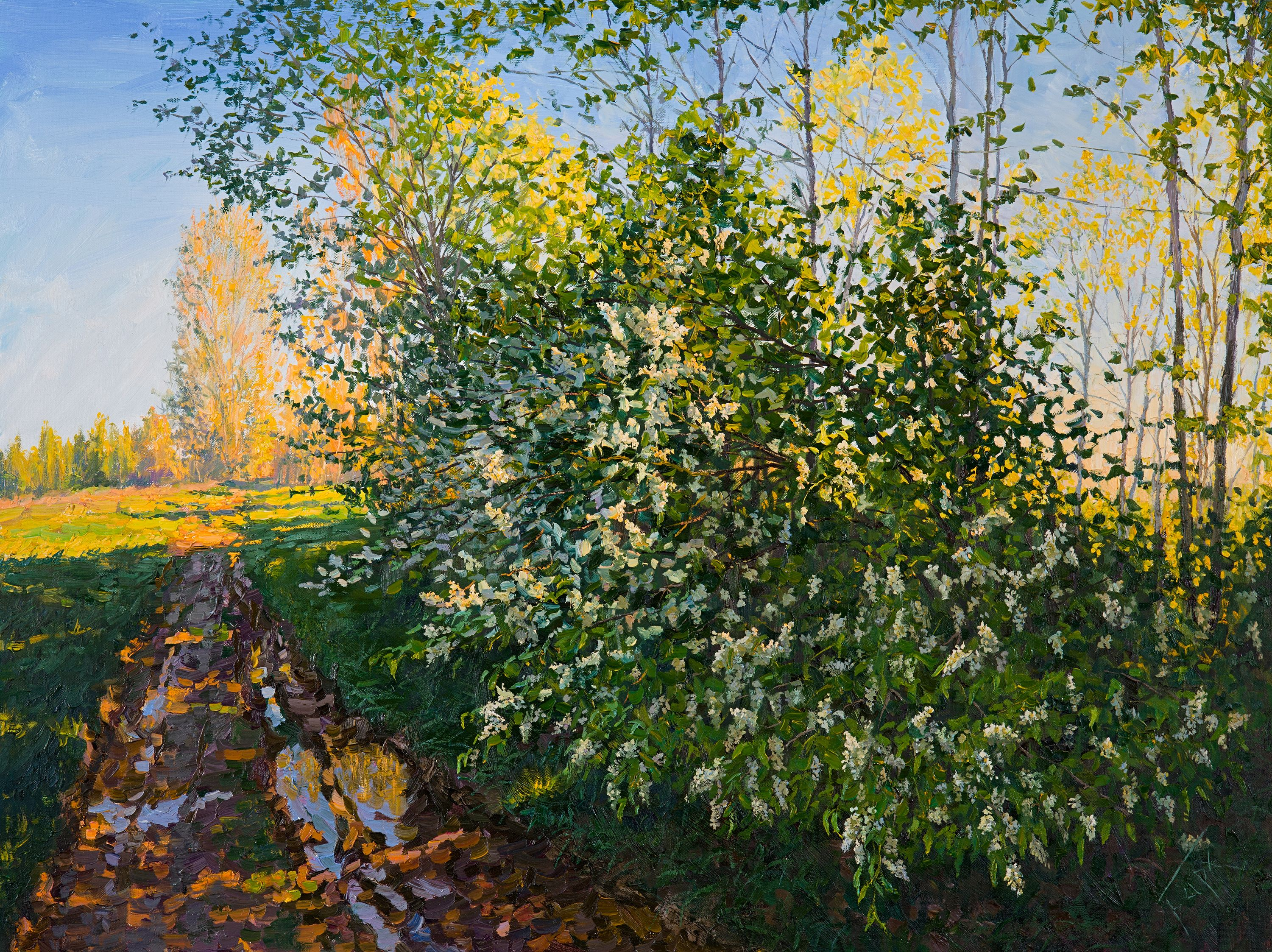 Bird cherry tree by the road, Painting, Oil on Canvas