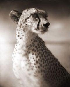 Cheetah Against Dark Sky, Masai Mara, 2004 - Black and White Photography