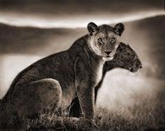 Sitting Lionesses, Serengeti, 2002 - Black and White Photography, Nick Brandt