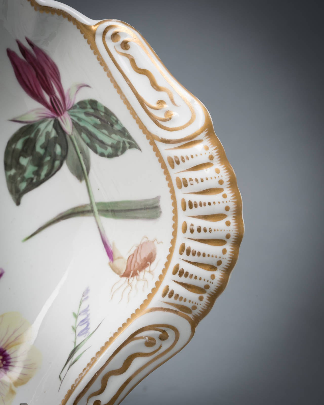 Pair of English Spode porcelain botanical shell-shape dishes, circa 1820. Specimens are titled on the reverse.