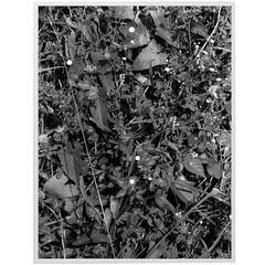 Tealia Ellis-Ritter, White Drops, 2015