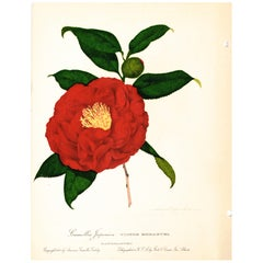 Set of Four Volumes American Camellia Catalog with 107 Hand Colored Lithographs