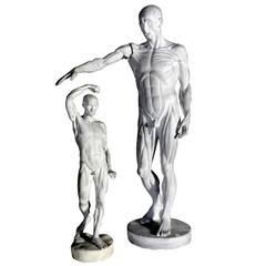 Pair of Anatomical Models, Jean Antoine Houdon