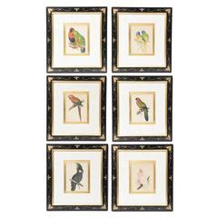 Set of Six Antique English Custom Framed Prints, Exotic Birds