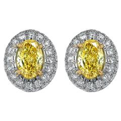 Oval Shaped Canary Diamond Gold Earrings