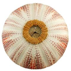 JAR Sea Urchin Quartz Clock