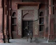 Karen Knorr - Shelter of the World, Dargarh Mosque Fatepur Siri, Agra