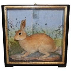 Rabbit in a Case