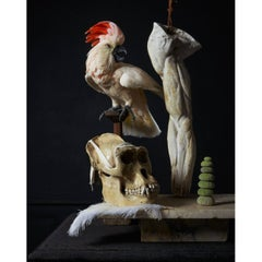 'Les Peintures des Taxidermistes' No. 3, Art Print Photo by Sinke & Van Tongeren