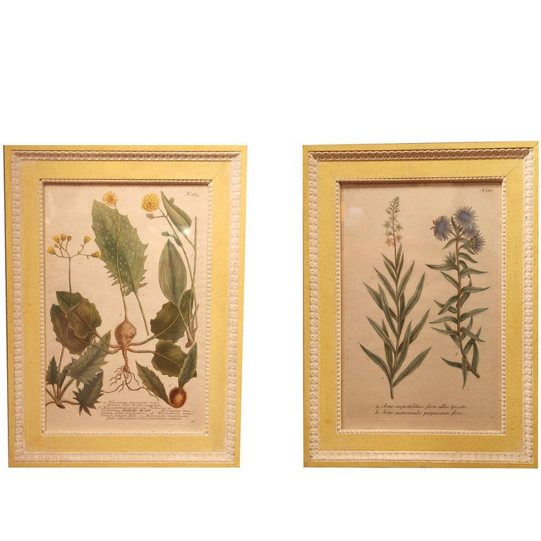 Set of 12 18th Century Botanical Prints by Georg Dionysius Ehret