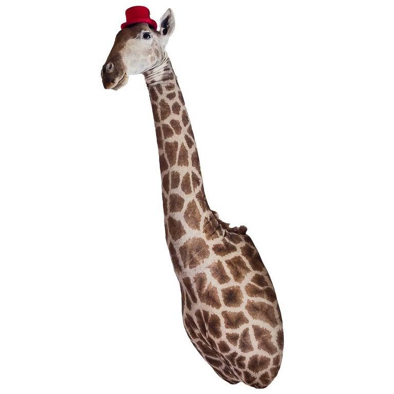 Taxidermy Giraffe Bust Mount For Sale
