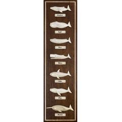 Mahogany Whaleboard Plaque with Seven Different Whale Species by Bill Sayle