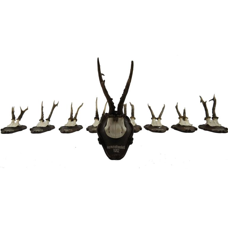 Roe Deer Mounted on Carved Black Forest Plaque
