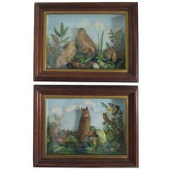 Pair of Late 19th Century Owl Dioramas