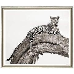 """The Leopard"" Print"