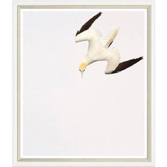 Gannet Print