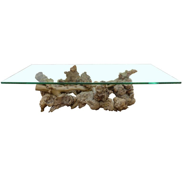 Burl And Driftwood Glass Top Coffee Table For Sale At 1stdibs