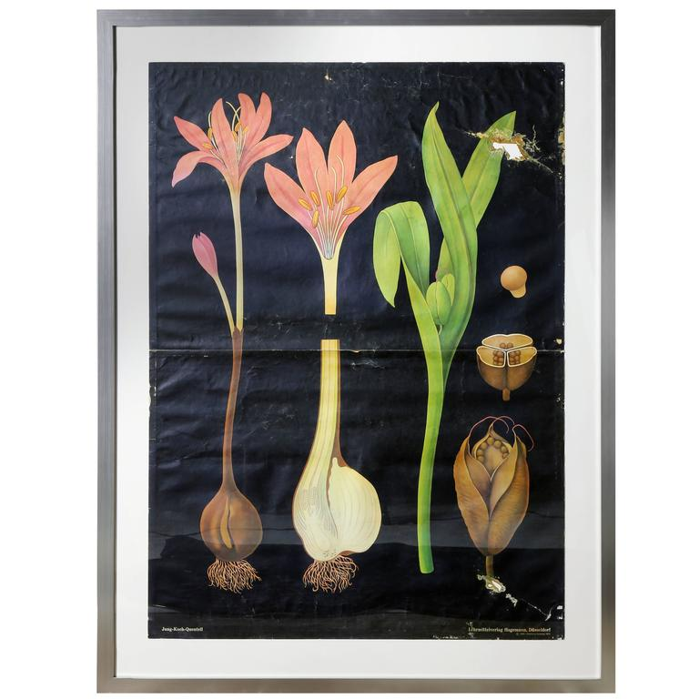 Quentell Vintage Framed School House Botanical Chart