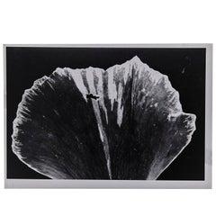 Enrico Garzaro, Flora Photogram