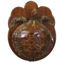 Fine Mounted Taxidermy Tortoise, circa 1900