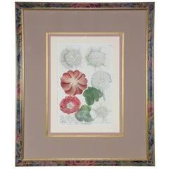 Hand-Colored Botanical Floral Framed Art Print Estate Find