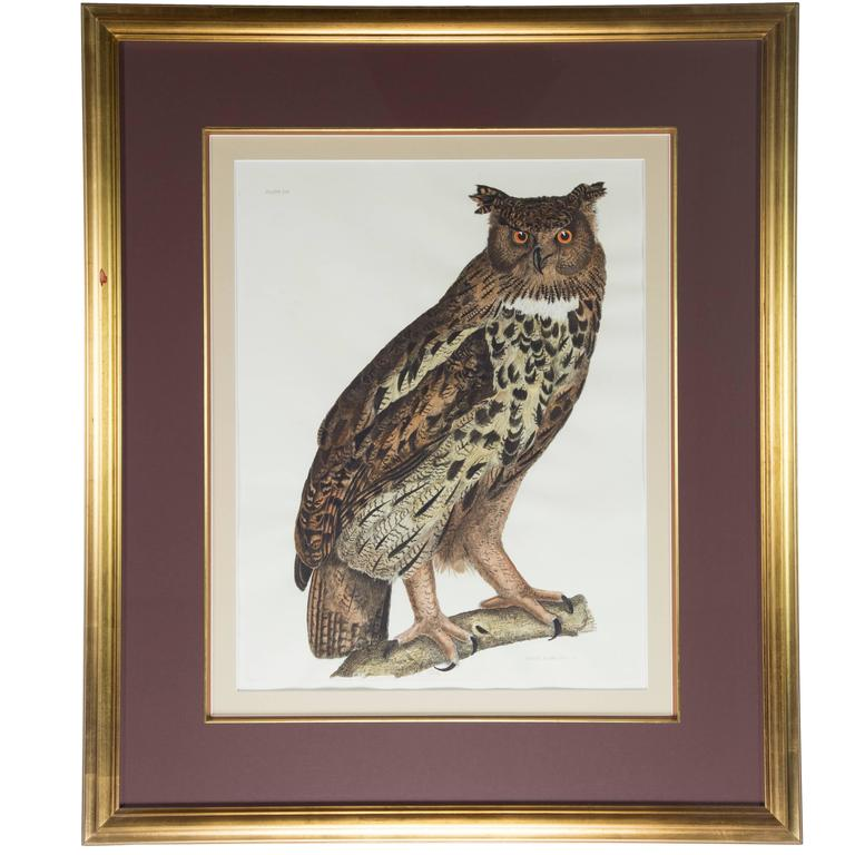 Great Eared Owl Wildlife 19th Century Hand Colored Framed Art Print