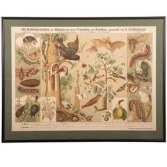 19th Century Antique German School, Teaching Chart, Poster