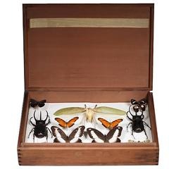 Mid-Century Insect Collection