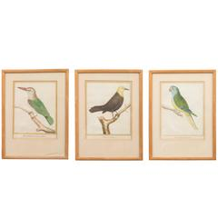 Three Ornithological Prints, from the Histoire Naturelle des Oiseaux