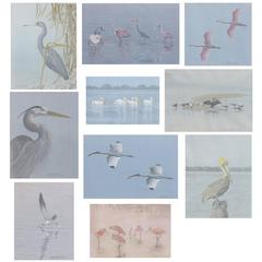 Paintings of Florida Wildlife