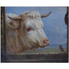Charles Jones, English Artist, Oil on Canvas, White Bull