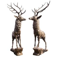 Magnificent Pair Lifesize Bronze Stags Deer Statues