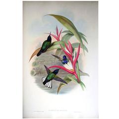 John Gould Original Hand Colored Lithograph 'Hummingbirds with Bird of Paradise'