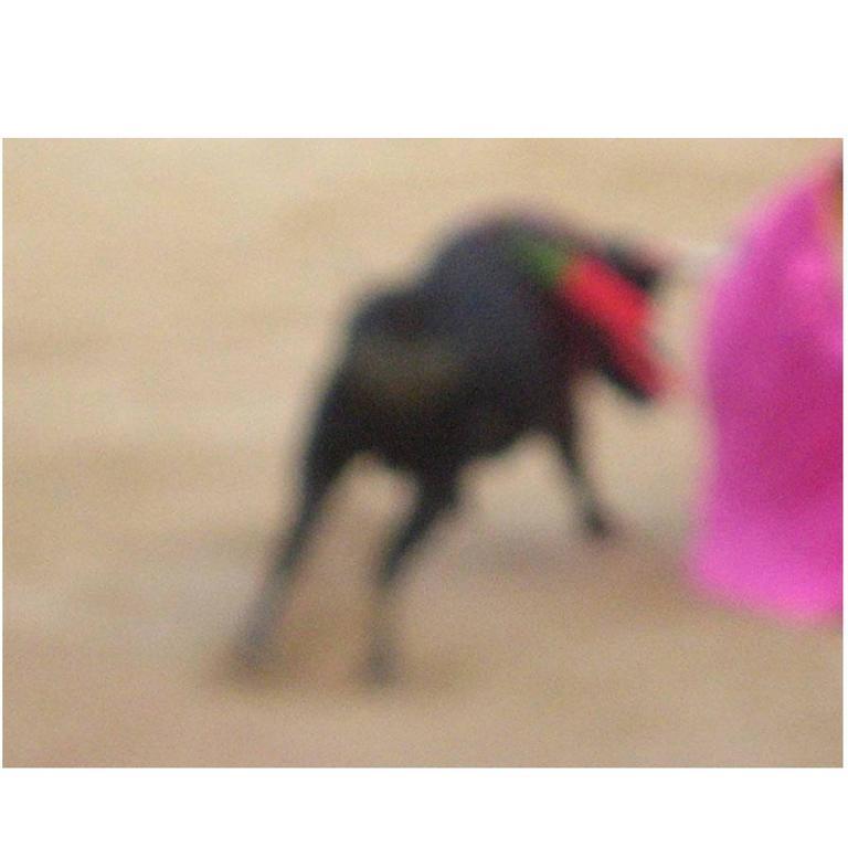 Bullfight Photograph No.1 by Michael Stuetz