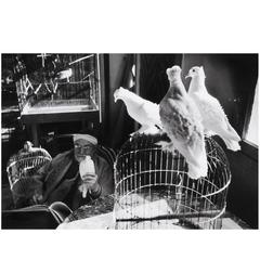 Henri Matisse Sketching Doves, Photograph by Henri Cartier-Bresson, 1944