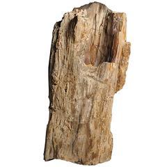Chinese Petrified Wood Planter