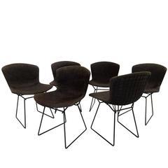 Set of Six Vintage Bertoia Chairs